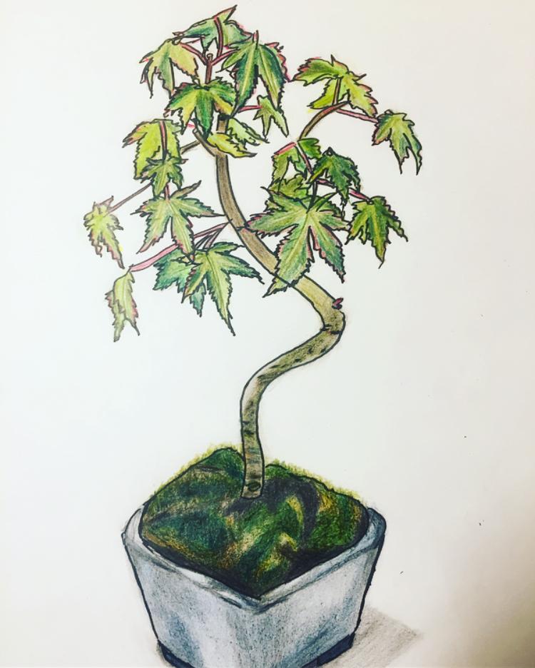 完成形-盆栽-sketch