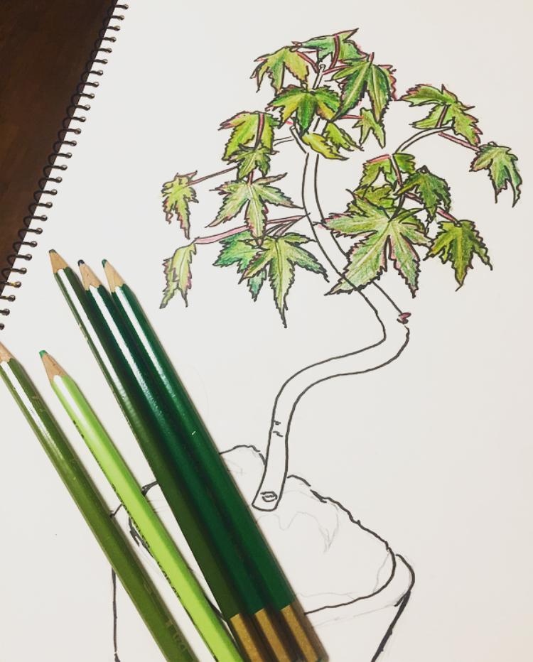 葉っぱに使ったカラー