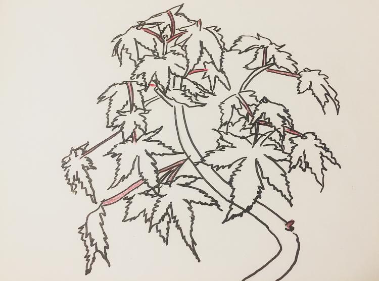 葉の着色1