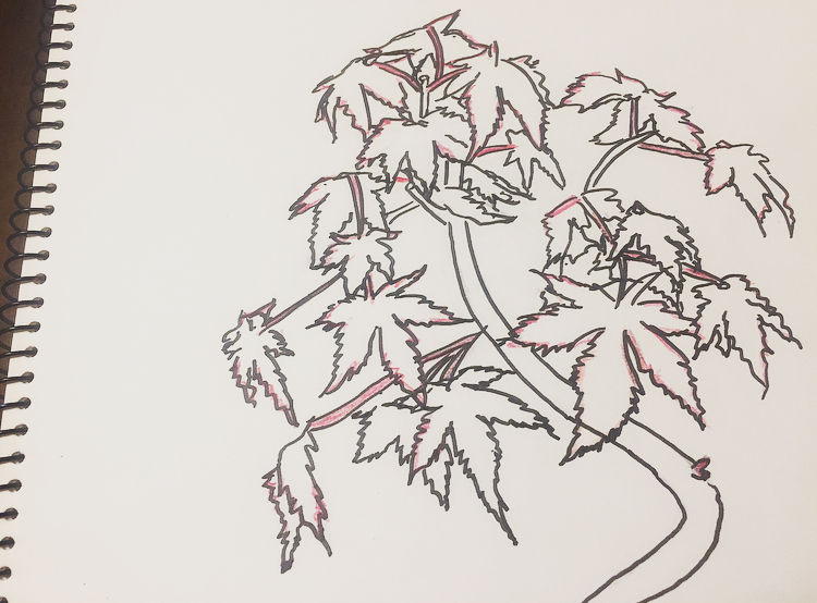 葉の着色2