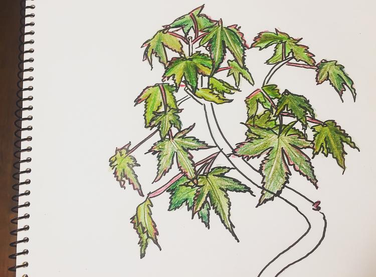 葉の着色5