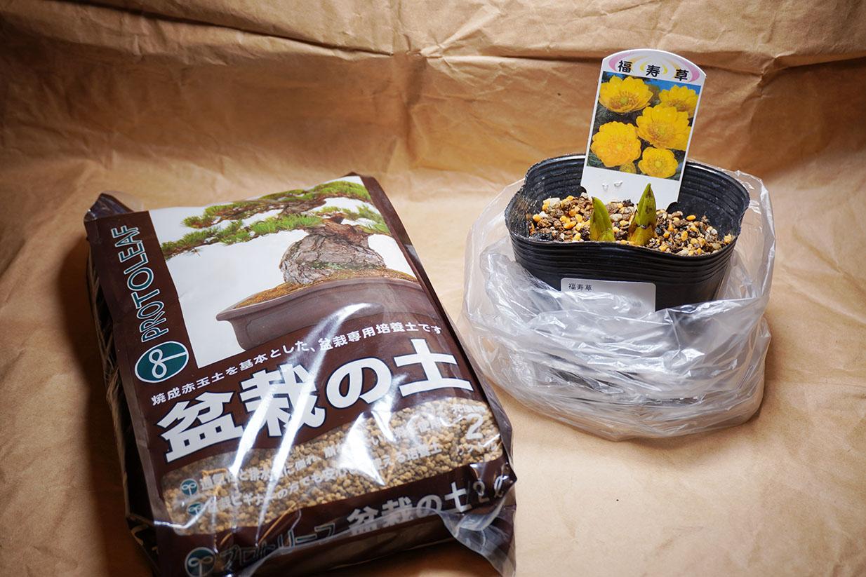 DSC00626-福寿草買った引き