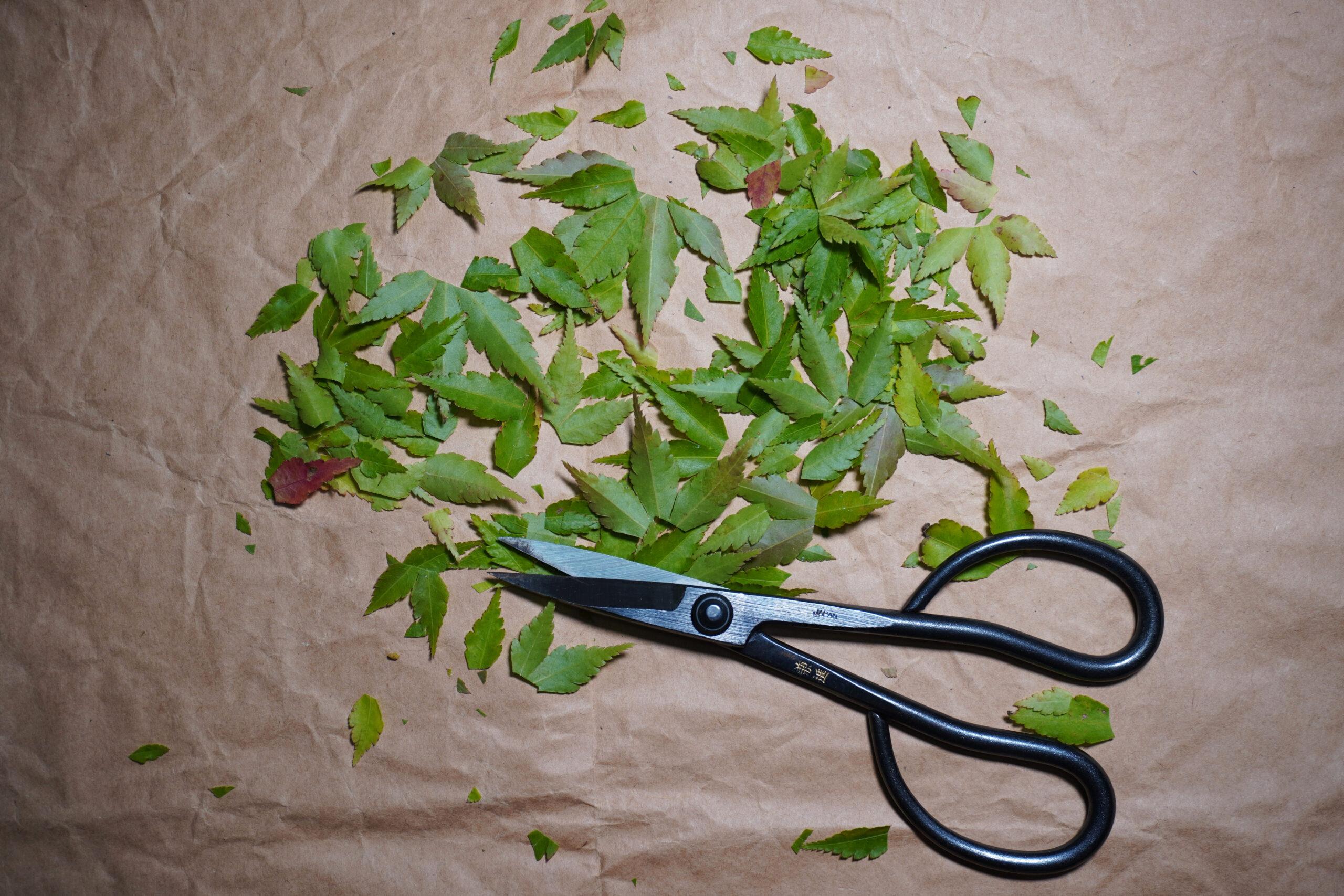 DSC01627-刈った葉