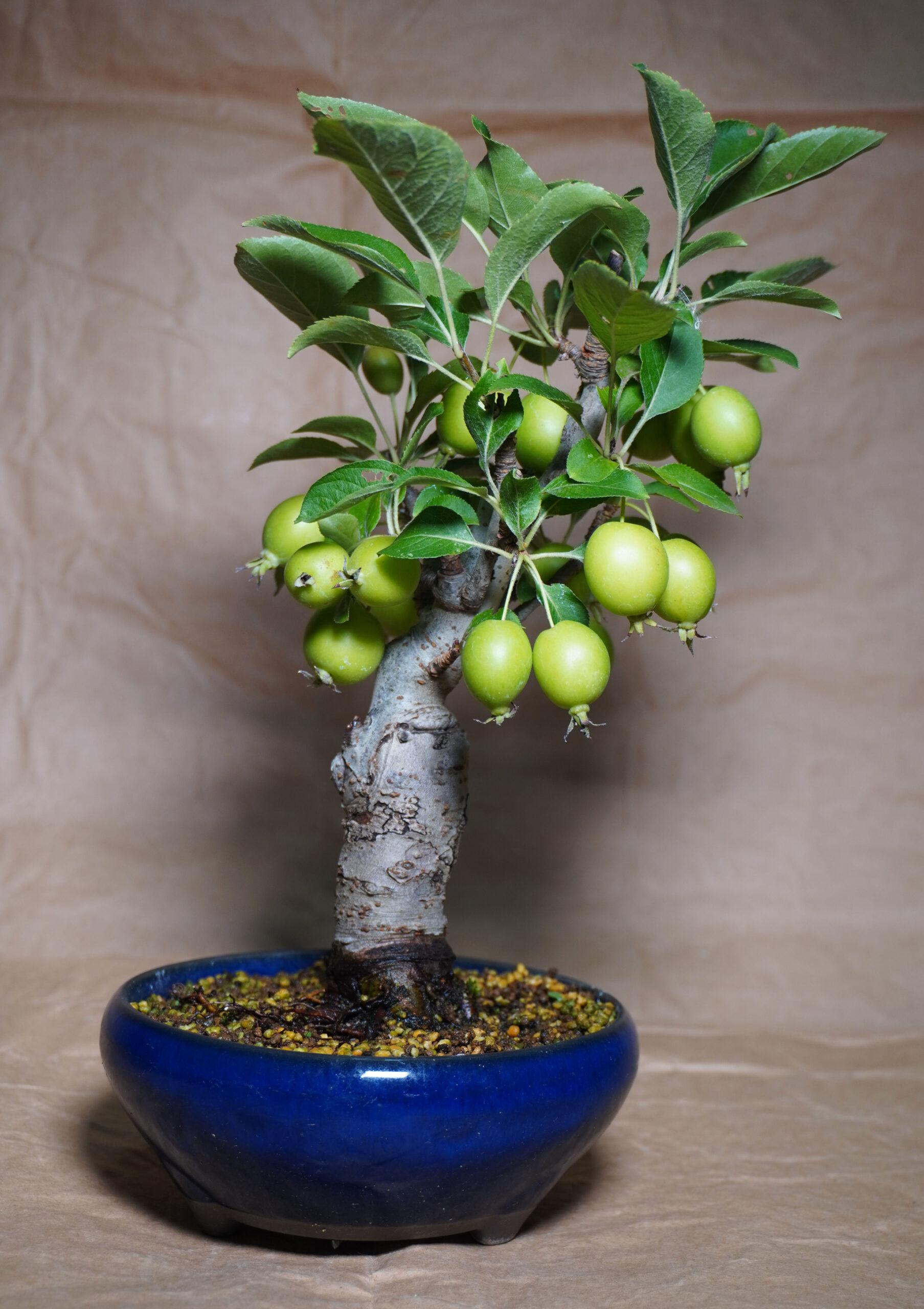 DSC01647-ヒメリンゴたて