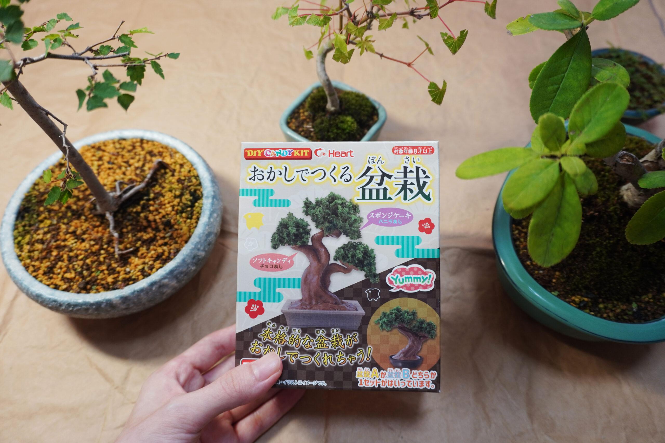 DSC01681-盆栽お菓子おもて