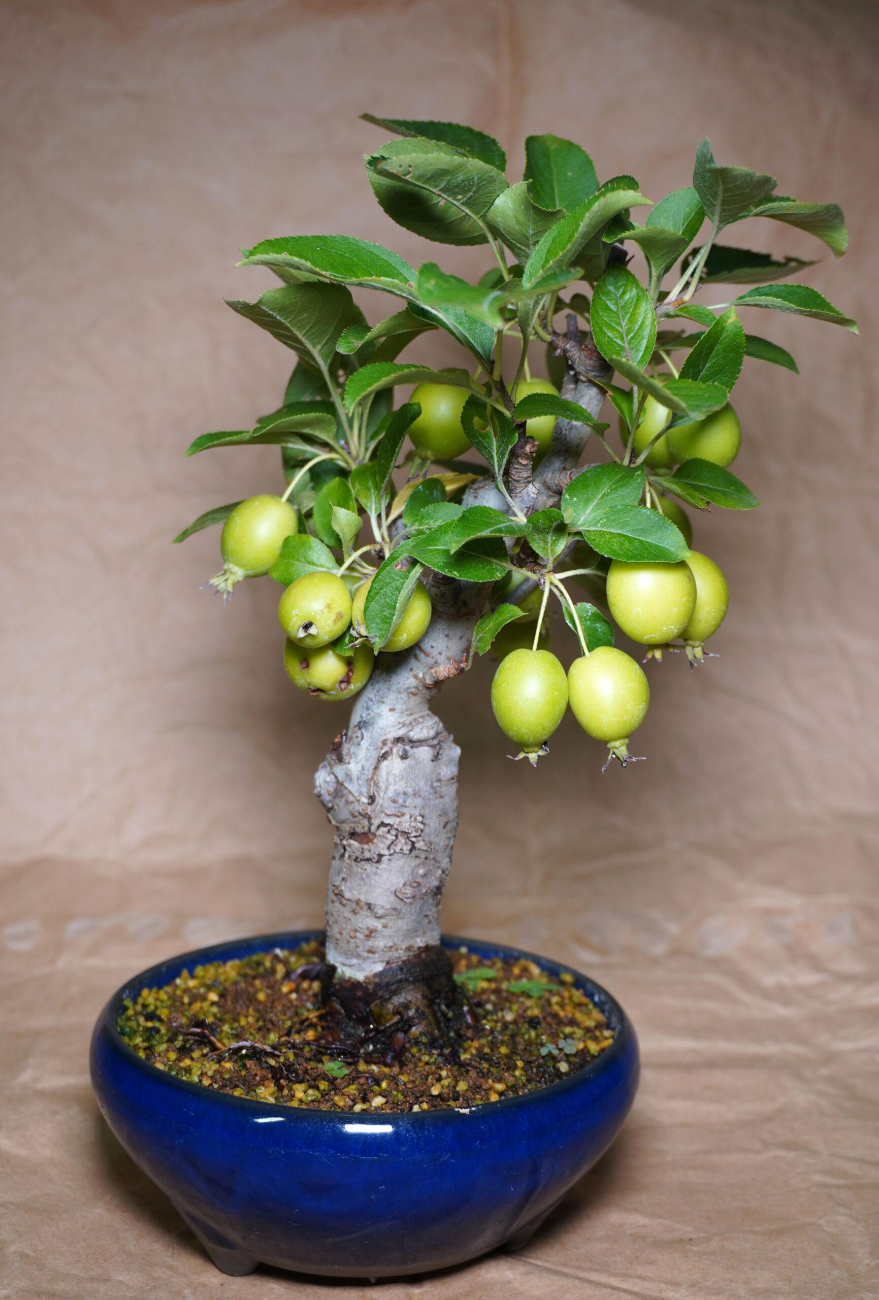 DSC01729-ヒメリンゴたて